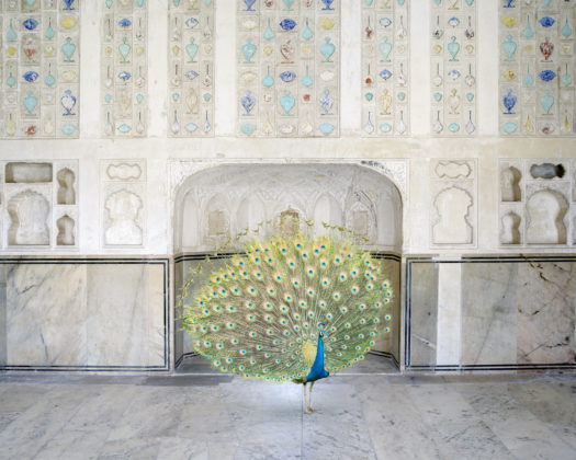 Karen Knorr, 070 MasterofSeduction, Amer Fort, Amer, India Song, 2008 -