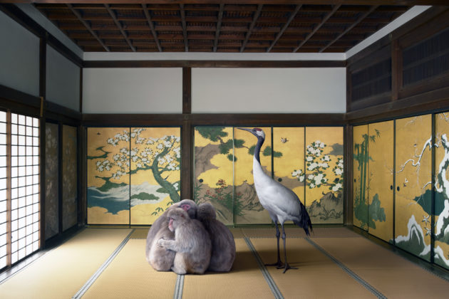 Guardian of the Temple, Nazen-ji Temple, Kyoto, série Monogatari, 2015