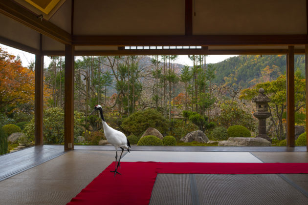 Karen Knorr, Journey to the Great Sage Jikko-In Temple , Ohara, série Monogatari, 2012 - ongoing
