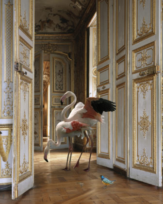 Karen Knorr, The Grand Monkey RoomII,série Fables, 2004-2008, Musée Condé - Château de Chantilly