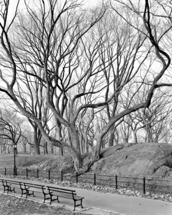 Mitch Epstein, American Elm, Central Park, New York, 2012