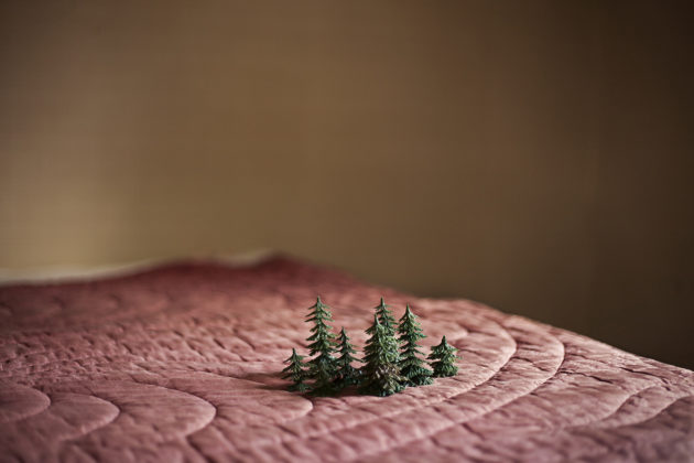 Small forest, 2014