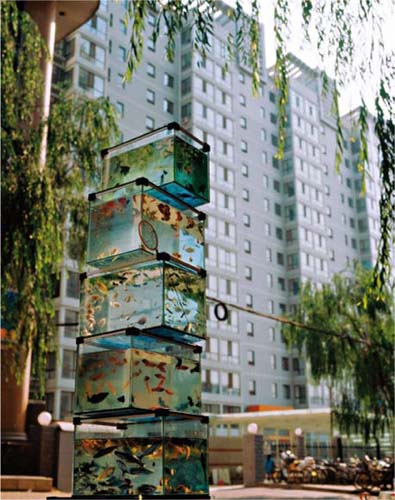 Ascendant poisson<br />