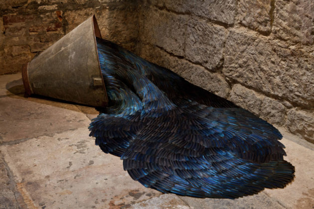 SECRETE, 2014 Mixed media installation with magpie feathers 50 x 110 x 160 cm