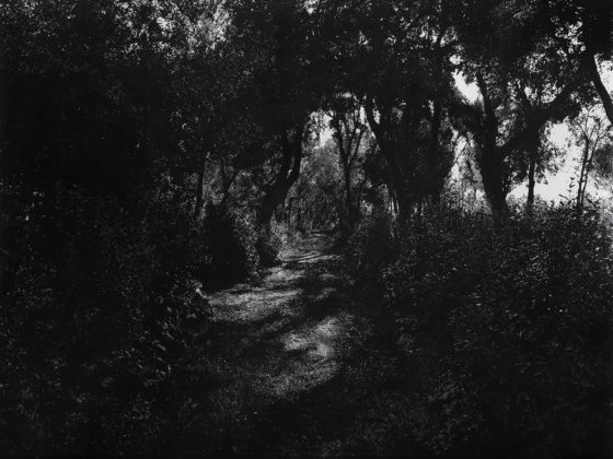 Le Bosco, 2020<br />